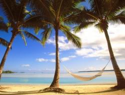 Cook Islands palms