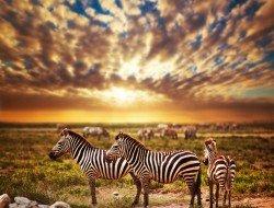 Tanzania Globus Tours