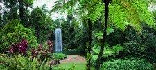 daintree rainforest all about australia