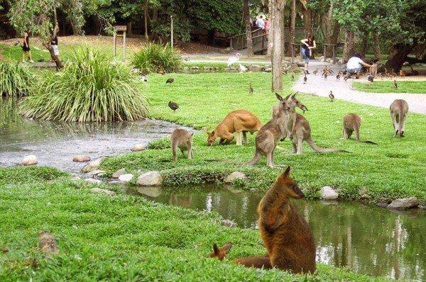 cairns-wildlife-habitat kangaroos australia gate 1