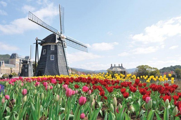 gate 1 amsterdam tulip time river cruise