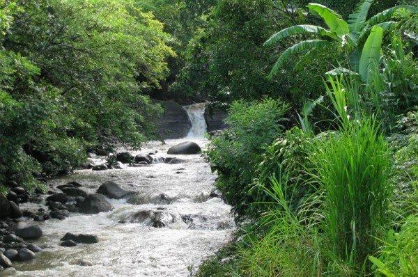 rainforest1gate 1 costa rica