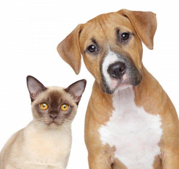 cat dog animal pets