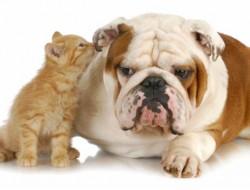 cat dog travel pets animal