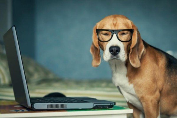 pets-dog-travel-planning-laptop-opmpter