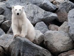 Artic Cruise Adventure 2017-arctic-cruise-masthead