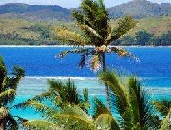 Fiji palm trees goway